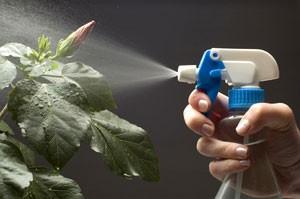 brumisation-plante-verte