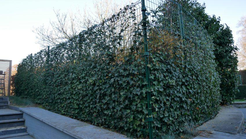 Cl ture en panneaux archives plaisir vert jardinier for Jardinier paysagiste 91