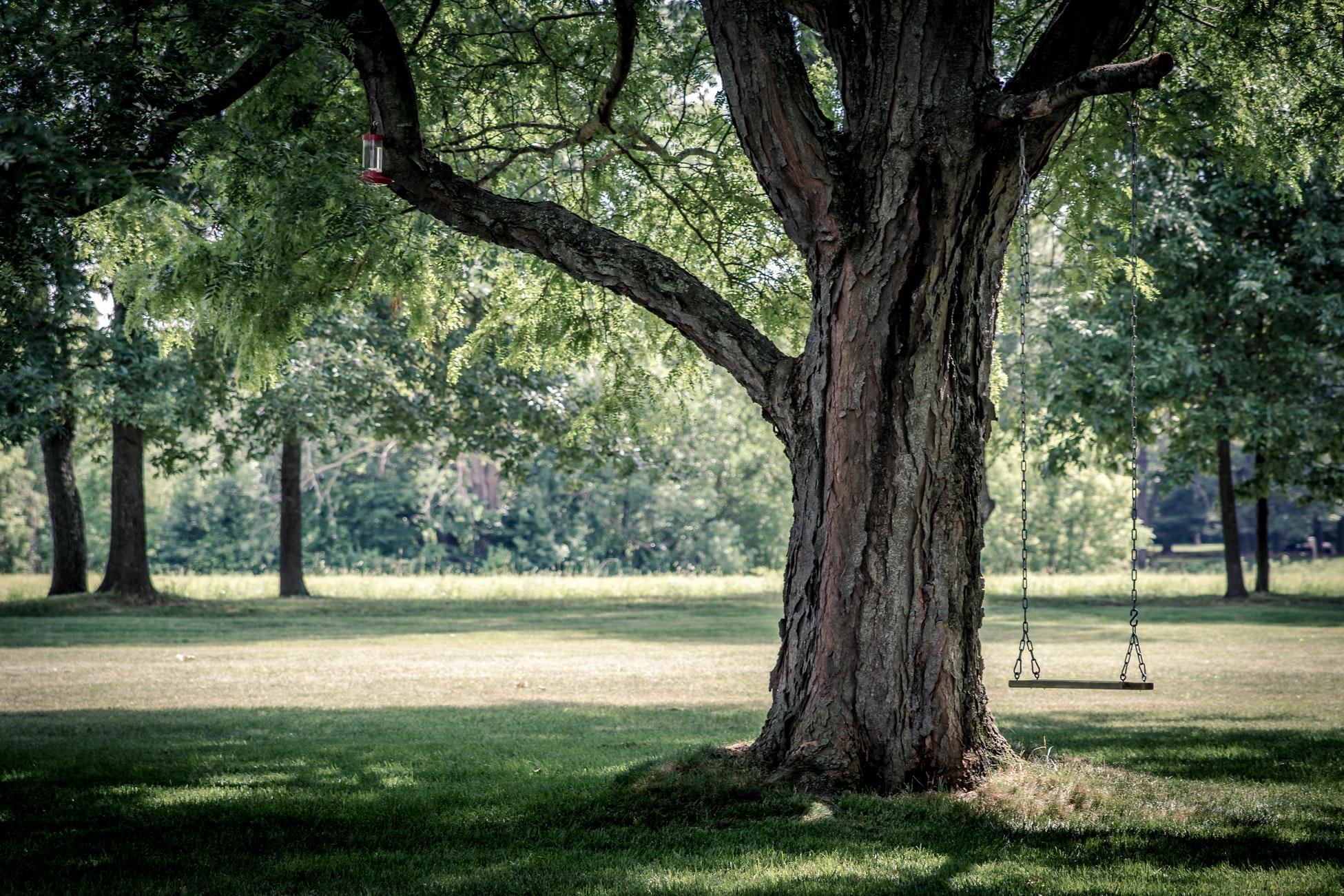 arbre grand tronc
