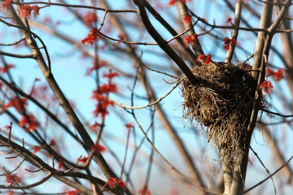 nid arbre