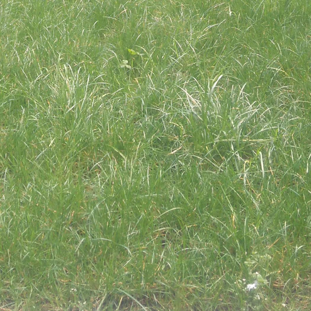 Exemple tondre une pelouse haute plaisir vert for Recherche tonte pelouse