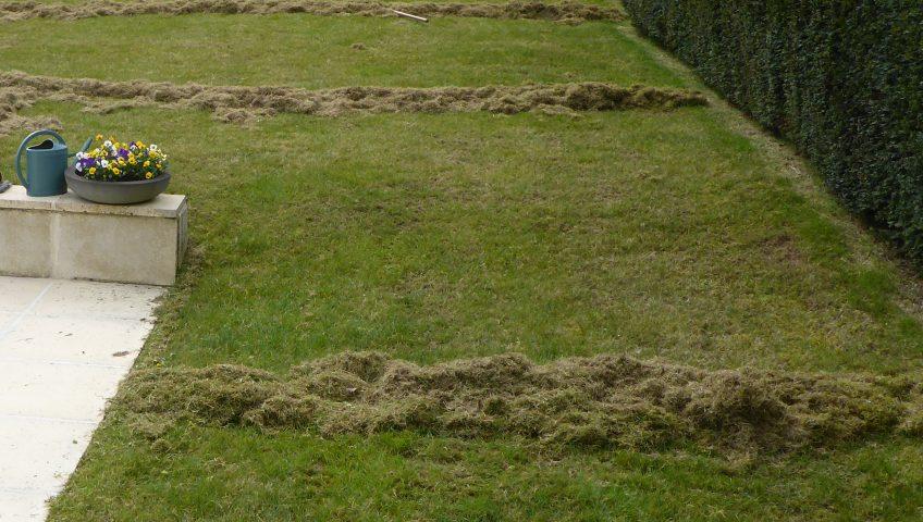 scarification archives plaisir vert jardinier paysagiste et arboriste cordiste. Black Bedroom Furniture Sets. Home Design Ideas