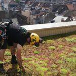 Entretien d'un toit végétal