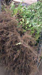 """Mettre en place une forêt comestible à Bruxelles - Projet """"Adopte un arbre"""""""