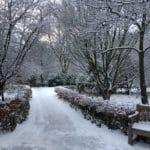 Que faire au jardin en hiver?