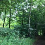 Comprendre le concept de la « forêt comestible »