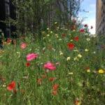 Prairie Fleurie - Installation, suivi et entretien - les bénéfices 1/5