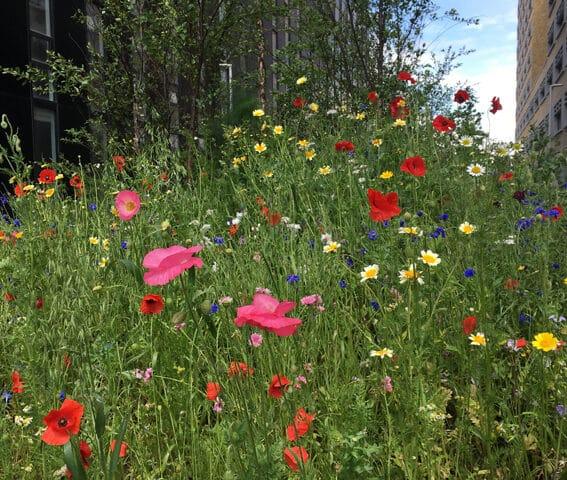 Prairie fleurie de Bruxelles Environnement sur le site de Tour&Taxis