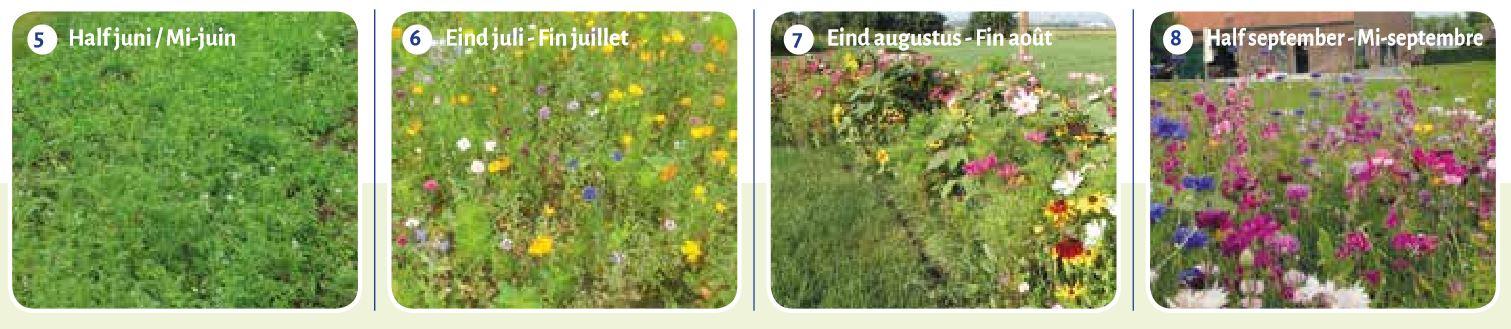 ©Advanta développement des semis