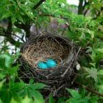 Période de nidification - règlementation Belgique 2020