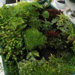 10 ans pv - terrarium - plantes