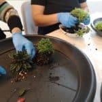10 ans pv - terrarium - nettoyage