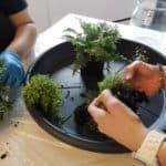 10 ans pv - terrarium - partage