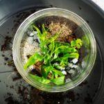10 ans pv - terrarium - fougere