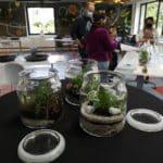 10 ans pv - terrarium - evaporation