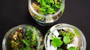 10 ans pv - terrarium - termine